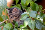 Kitten in the bushes