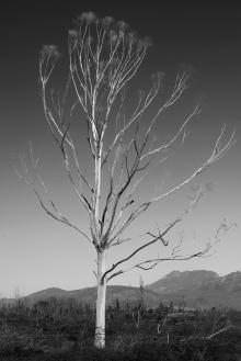 Stark, dead tree